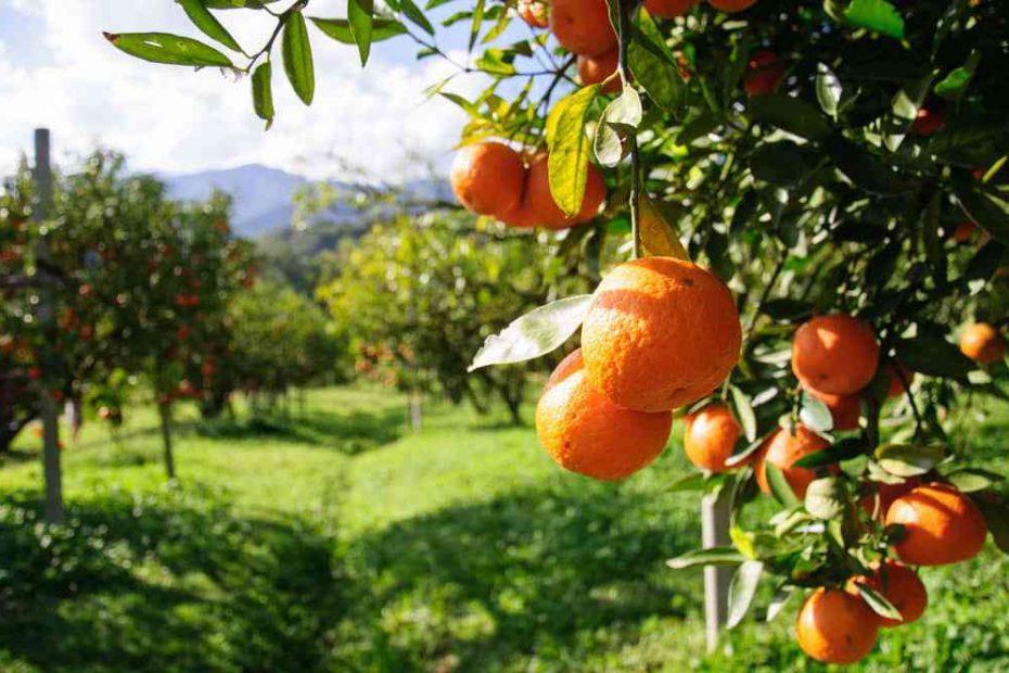 Eco camping entre naranjos